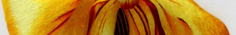 麦穗-(7)_03