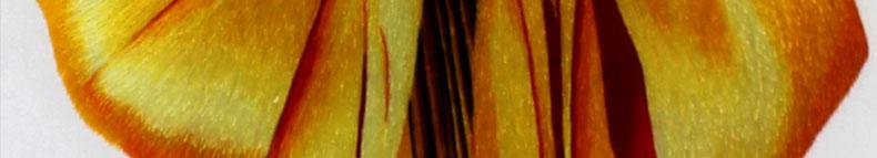 麦穗-(7)_04