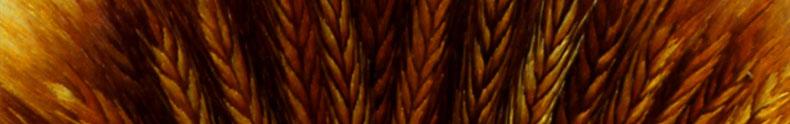 麦穗-(8)_03